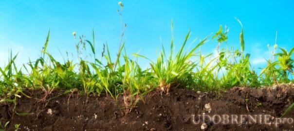 Как бактерии улучшают растения, насыщая почву азотом