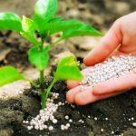 Химические удобрения для сада и огорода: виды, применение