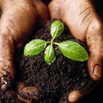 Органические удобрения: секреты производства и применения для растений