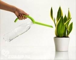 подкормка цветов сахаром