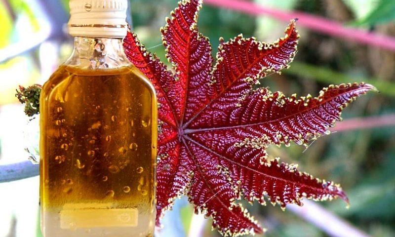 касторовое масло как удобрение для цветов