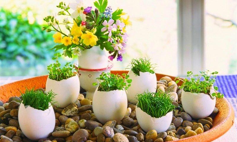 подкормка для цветов из яичных белков