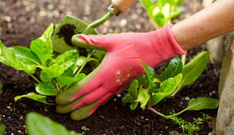 подкормка комнатных растений удобрениями
