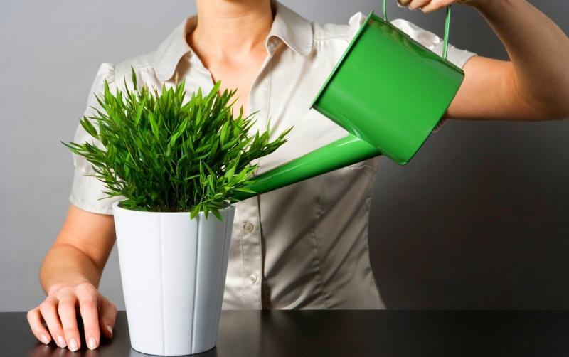 йод для комнатных растений как подкормка