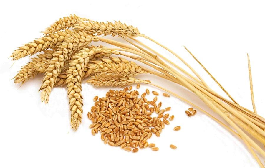 удобрения для зерновых культур