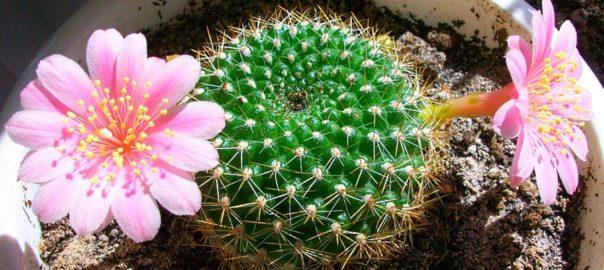 удобрения для кактусов