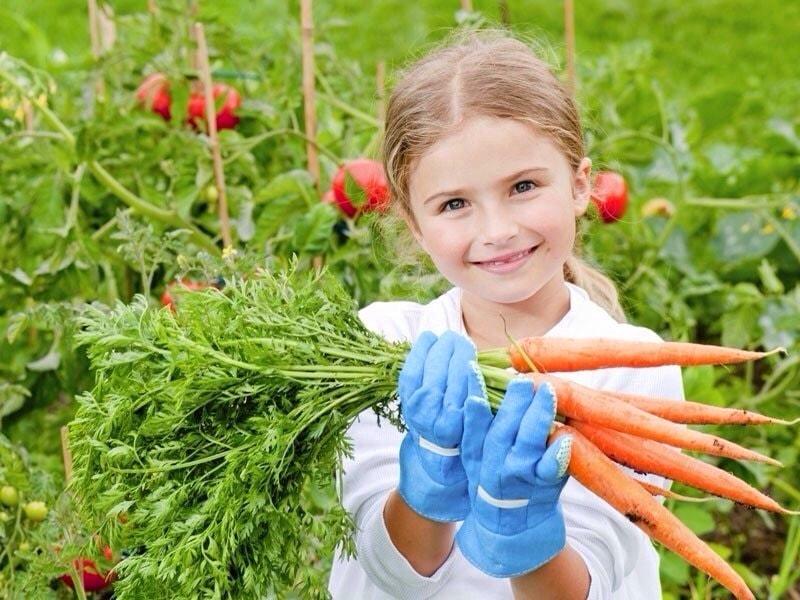 удобрения для моркови