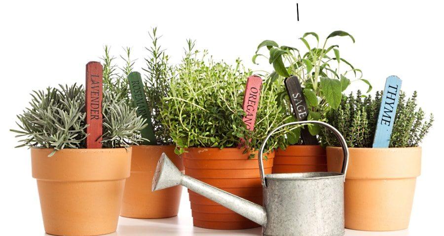 как правильно поливать растения в контейнерах