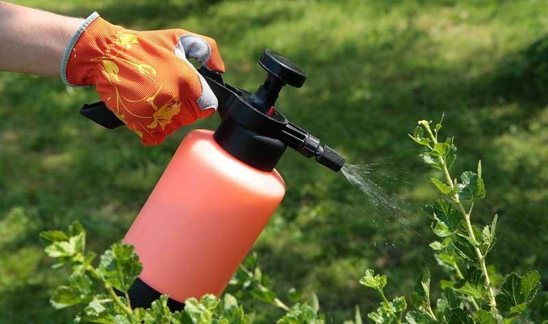 луковая шелуха как удобрение для комнатных растений