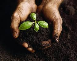 Как эффективно увеличить плодородность растений
