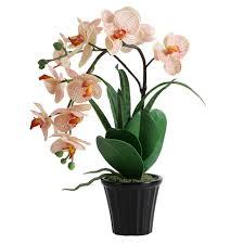 orhidei-elegantnost-v-gorshke