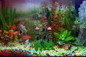 kak-ukrasit-akvarium