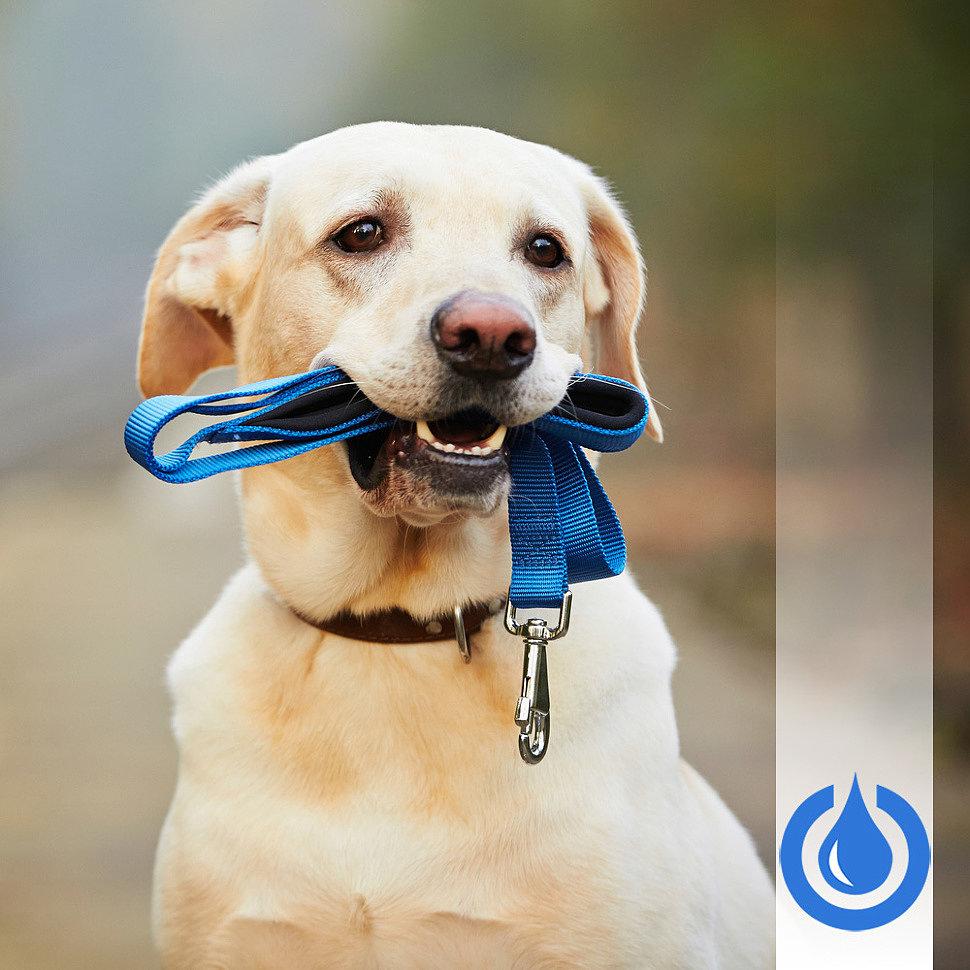 Что учесть при выборе амуниции для собак
