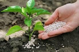 Как увеличить урожайность-удобрения